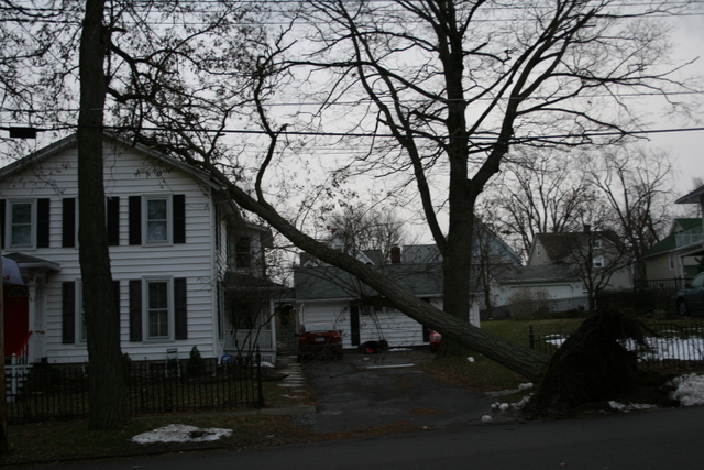 Today: high winds knock down trees.